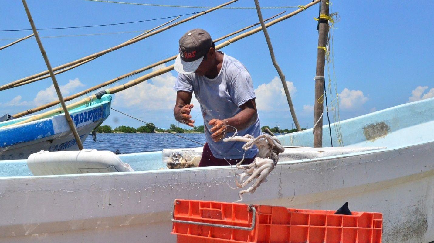 pescadores_reportan_buen_arranque_de_captura_de_pulpo_en_yucatxn.jpg_1834093470